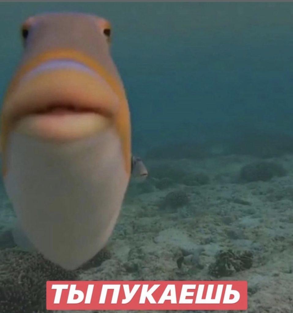 Рыба не может сказать
